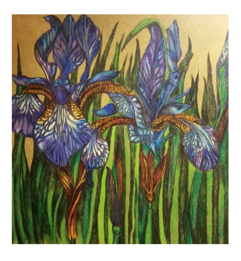 Irises both