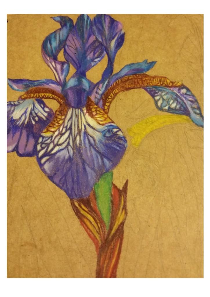 irises progress 1