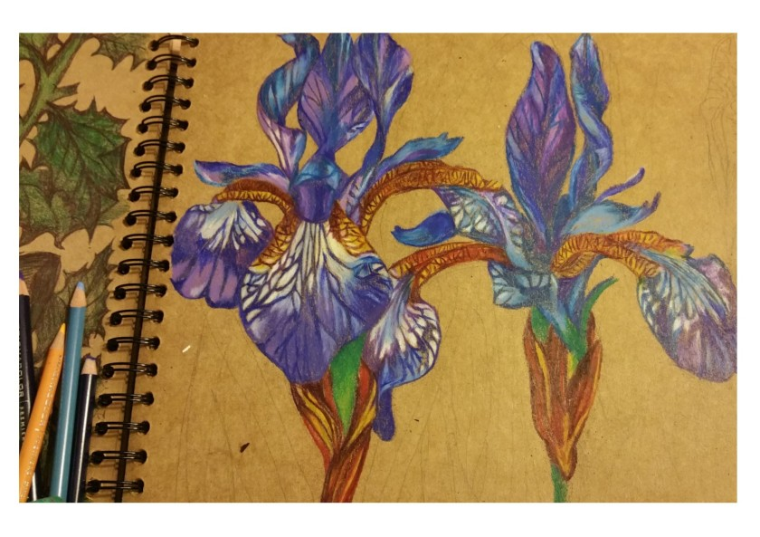 irises progress 2