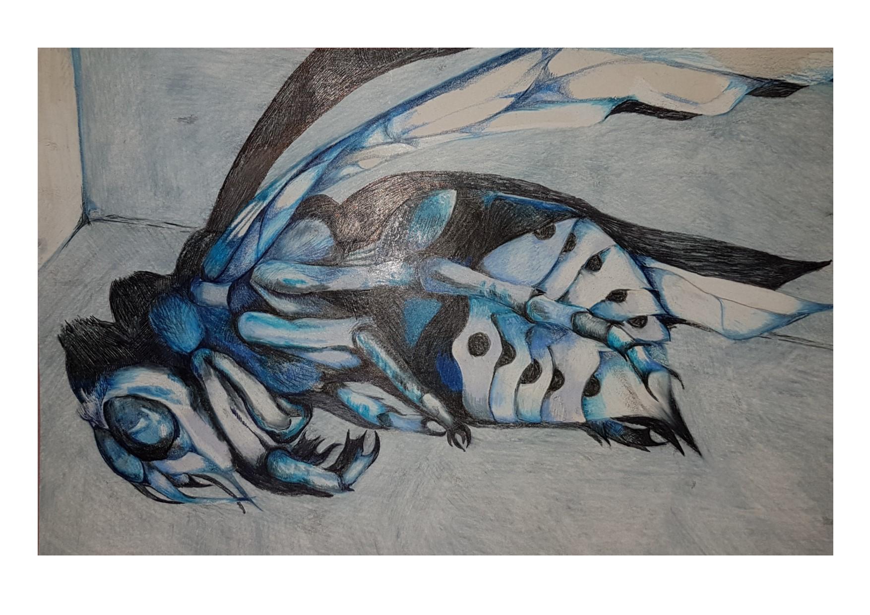 blue hornet in a matchbox