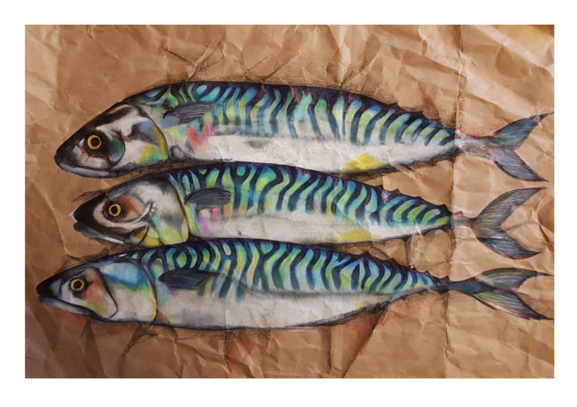 mackerel on brown paper preliminary sketch