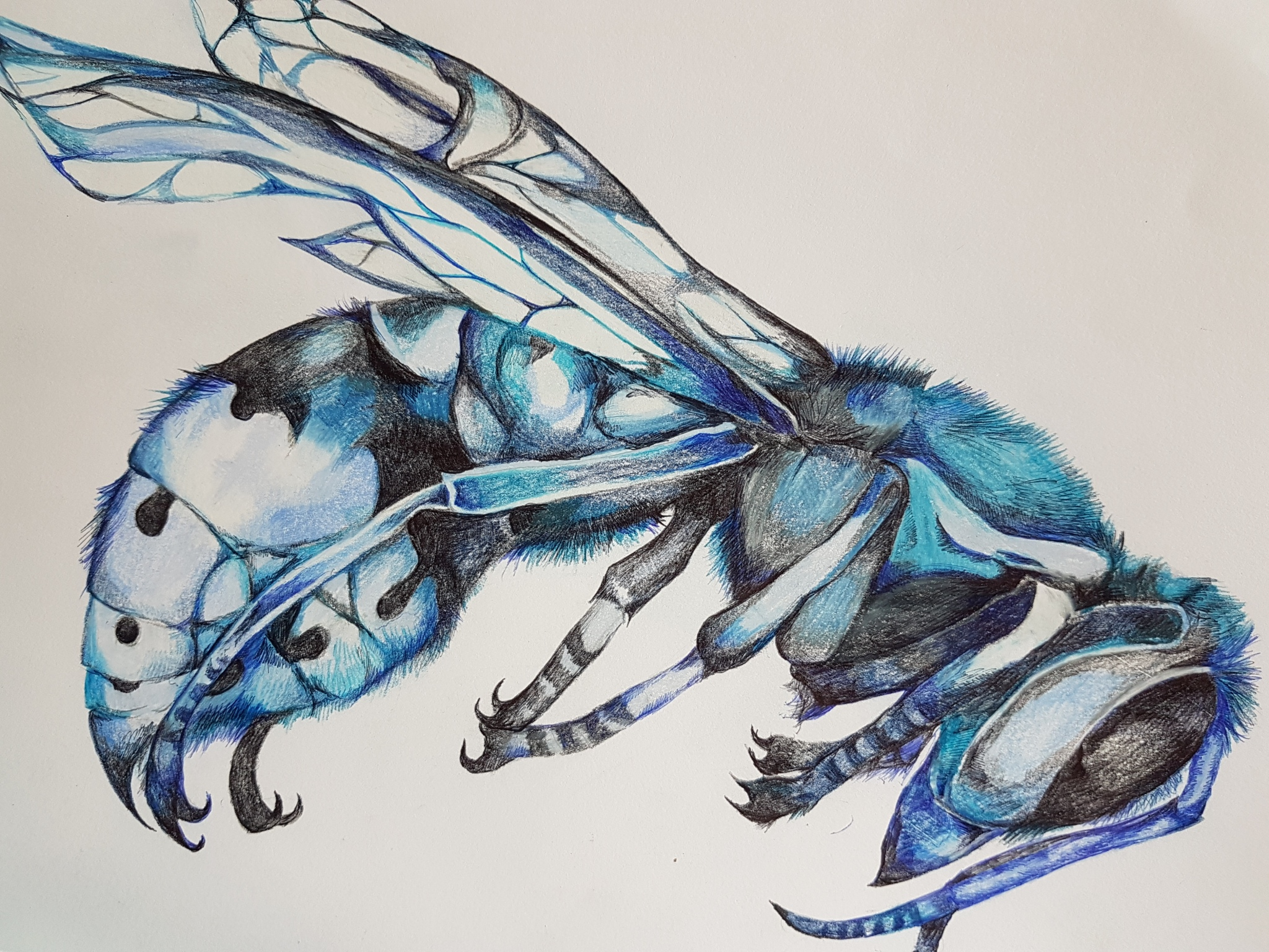 playing with colour, blue hornet