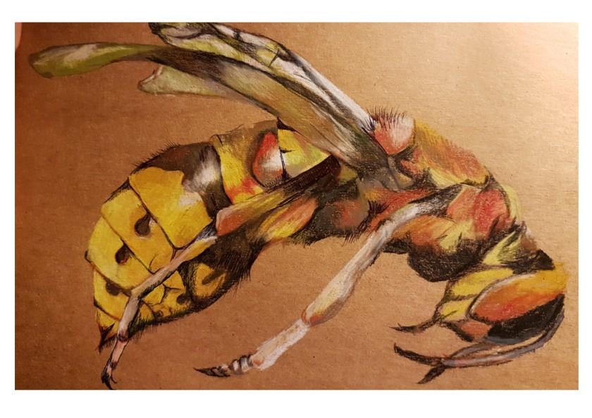 Yellow Hornet